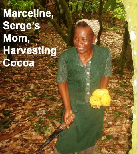 Marceline, mother of Serge Etele, harvesting cocoa in Cameroon, fall 2012. Photo by Serge Etele.